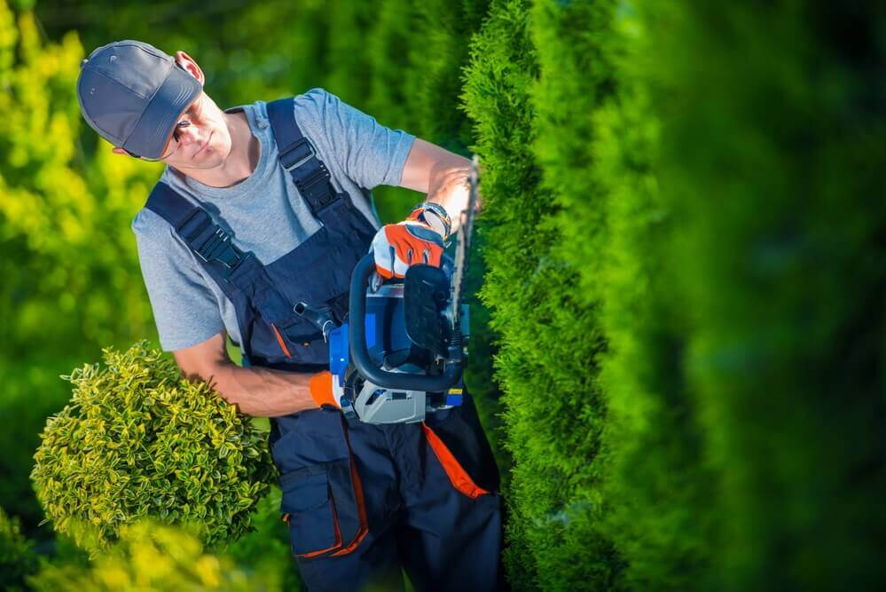 image of gardener using a hedge trimming tool trimming a green hedge