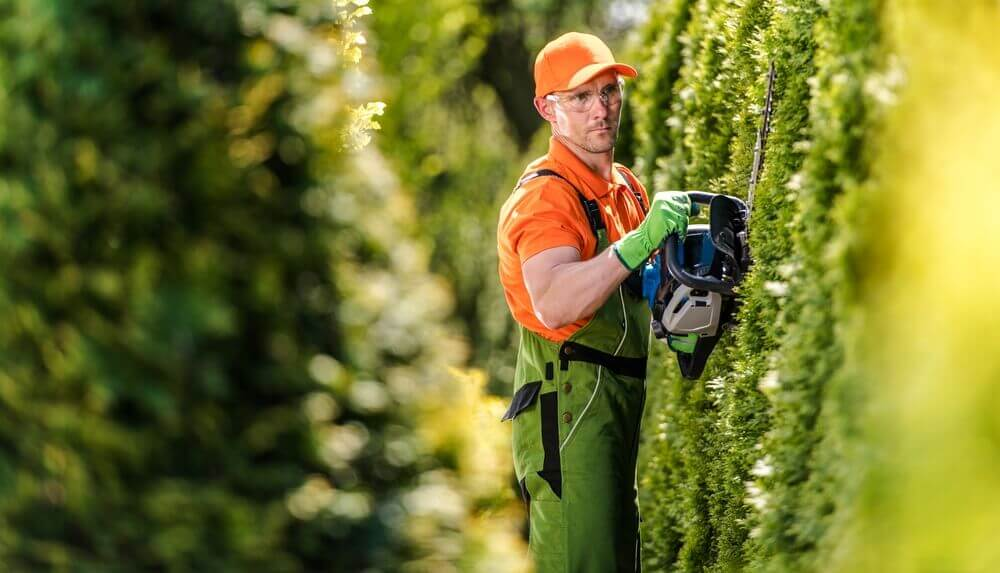 a gardener wearing a orange cap and safety glasses trimming the side of a hedge