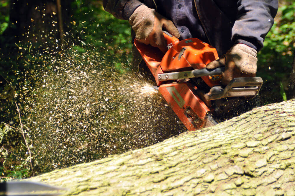 close up of a gardener Toowoomba worker using chainsaw cutting through a log